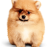 slider-dog-small.png